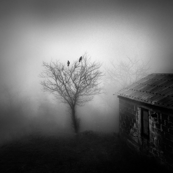 The Crows by Diggeo