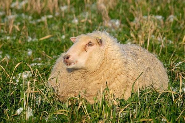 wool coat by jeakmalt