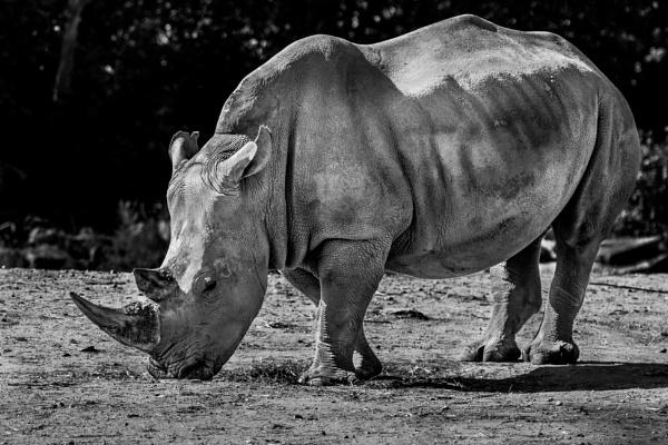 Rhino by TornadoTys