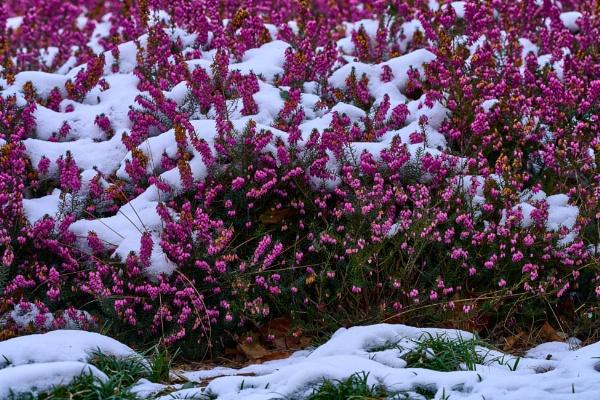 Winter Garden by JJGEE