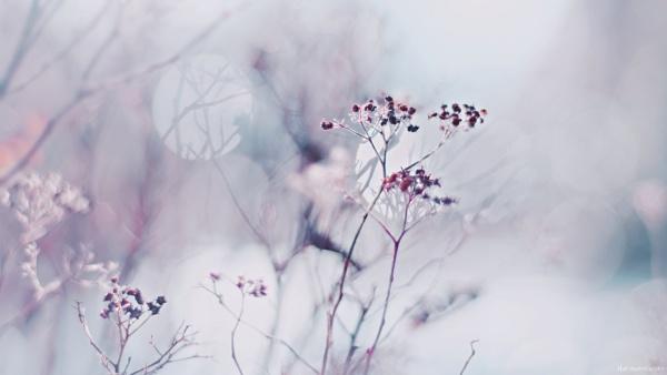 Winter Impression by HarmanNielsen