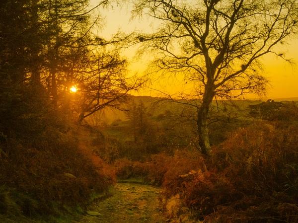 Dawn by suemart