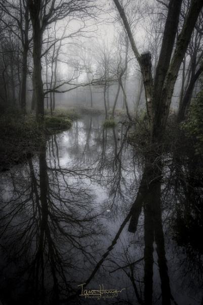 Foggy Common 3 by IainHamer