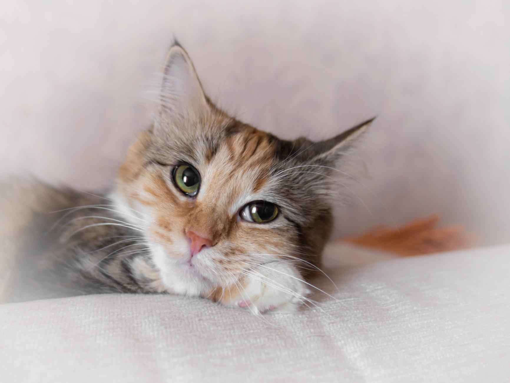 *Cat*