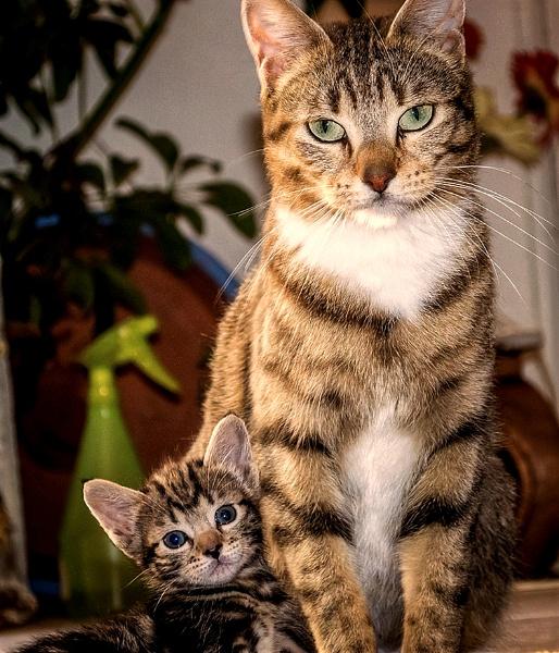 cat kitten by Repertoire