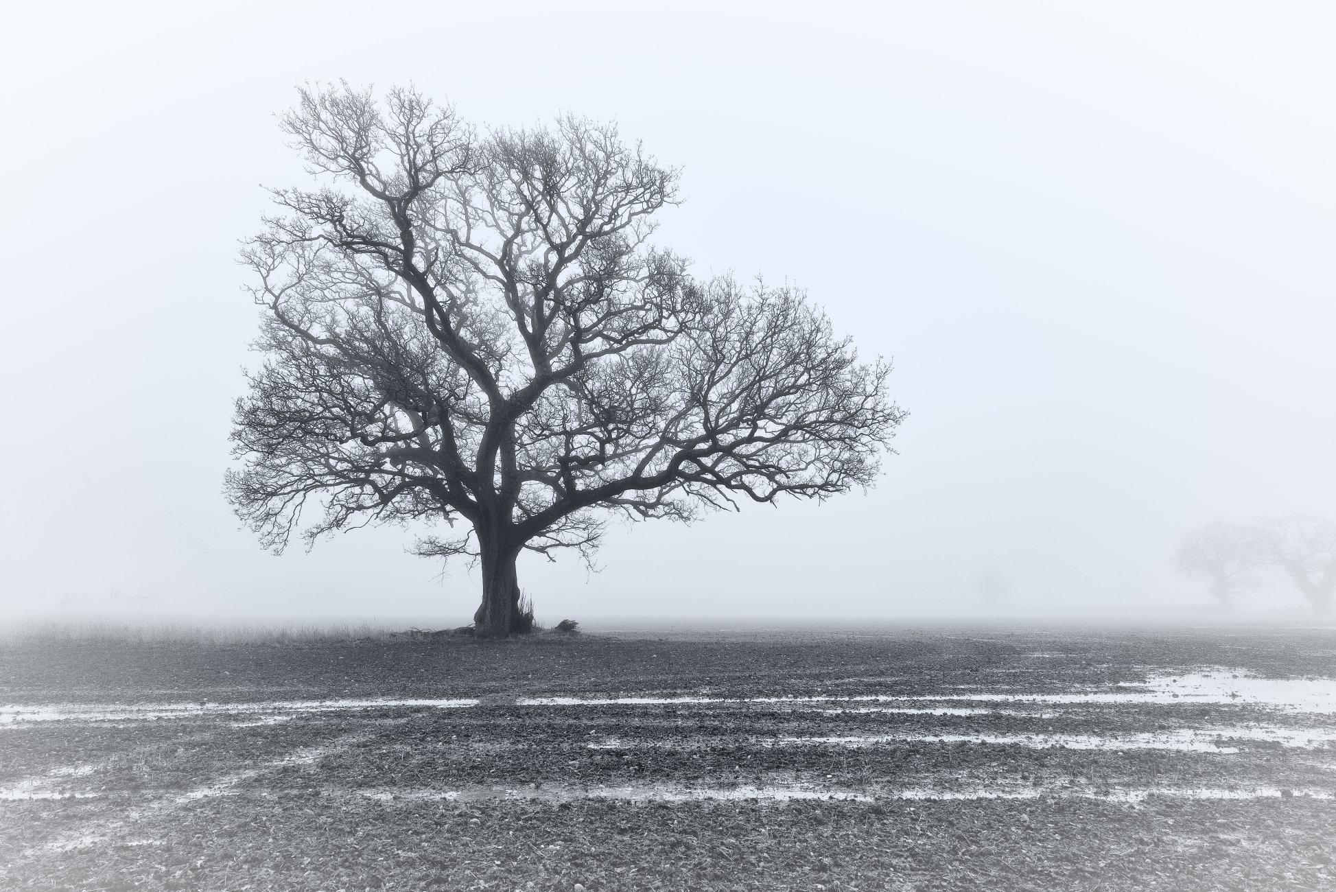 Winters Mist