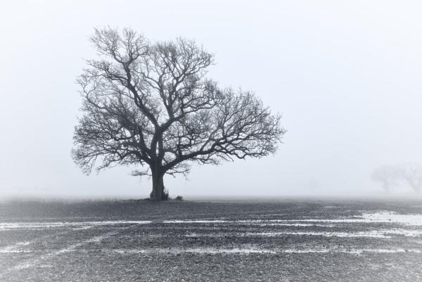 Winters Mist by Stephen_B