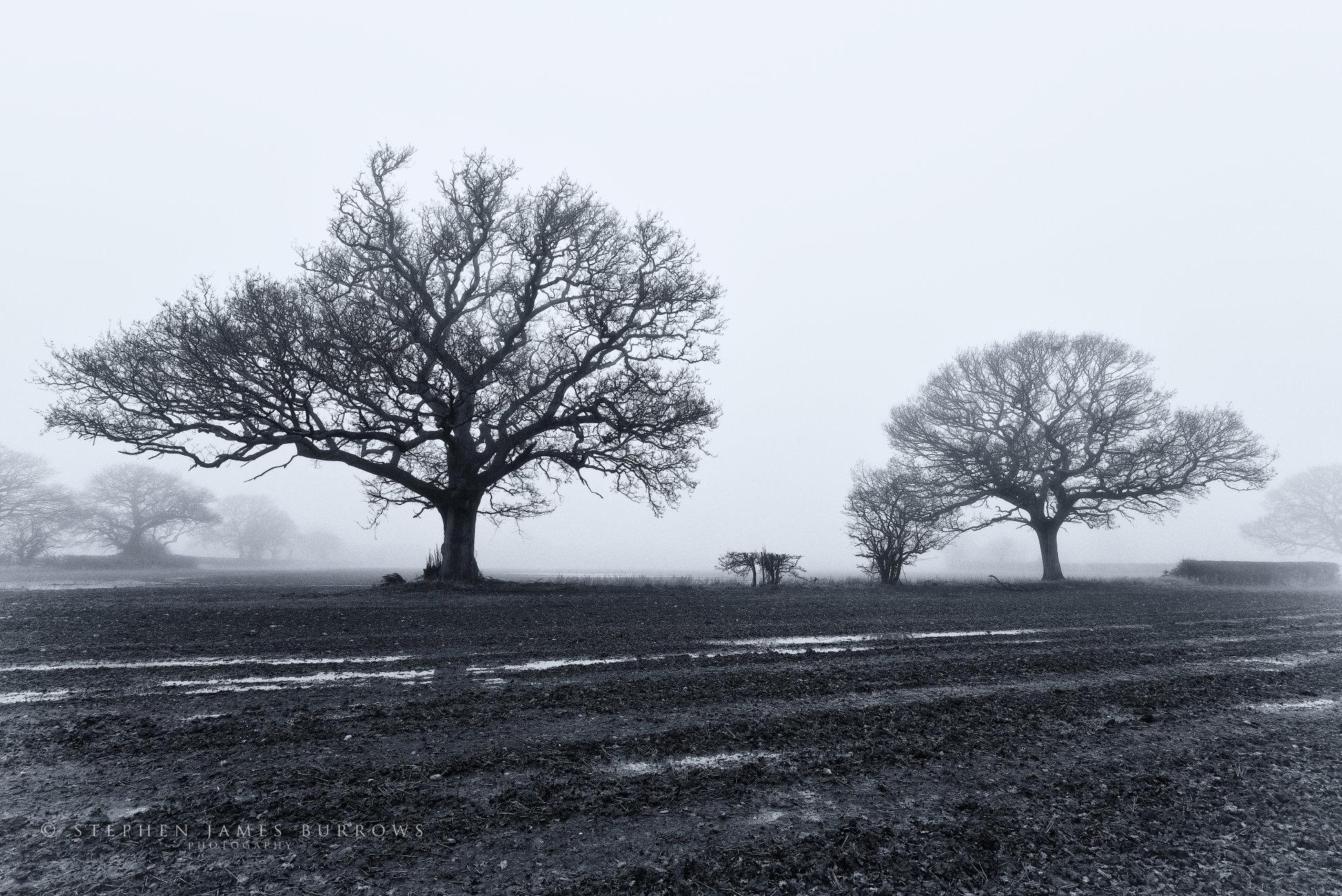 Winters Mist III