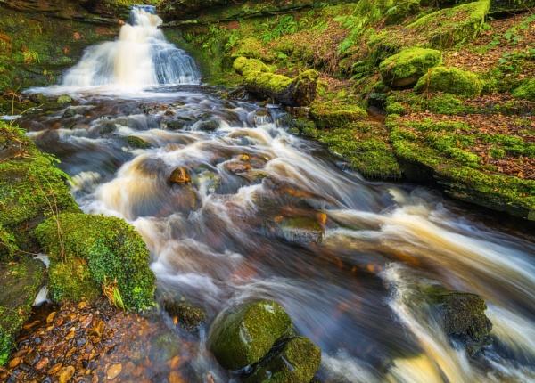 Woodland Flow by douglasR