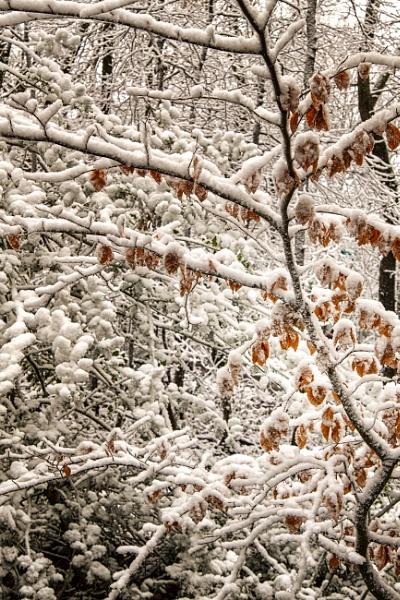 Nature\'s Snow Art by Alfie_P