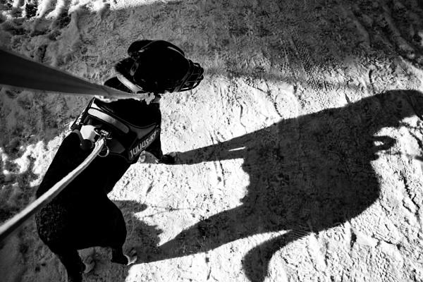 Simply Shadows 23 by Alfie_P