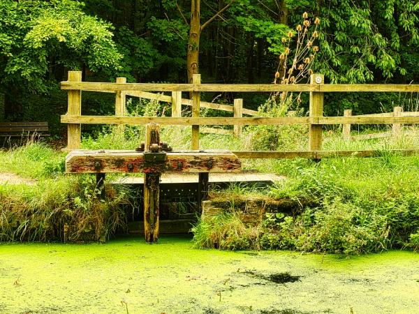 Flood Gate by dflory