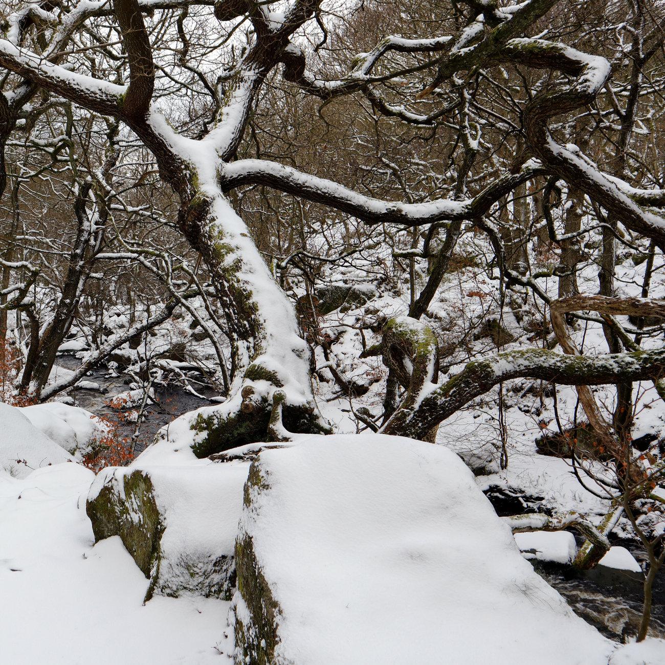 Padley woods Derbyshire