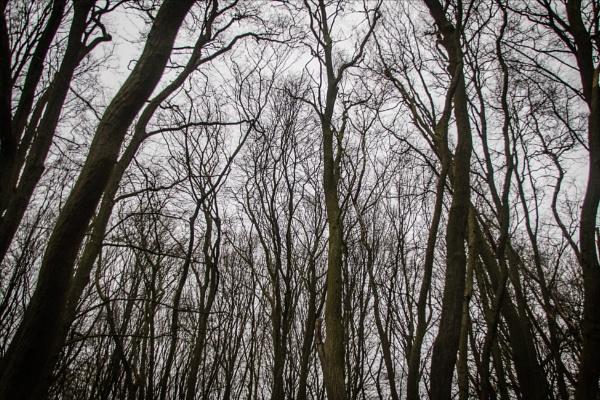 Enclosing woodland by rambler