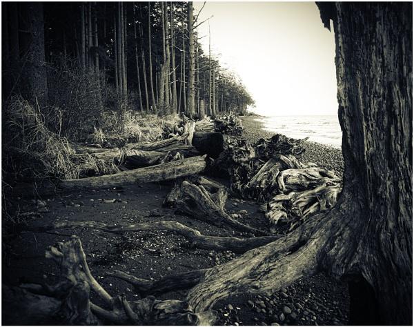 Driftwood by Daisymaye