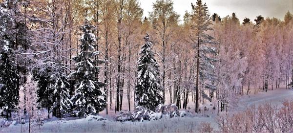 winter by MTT