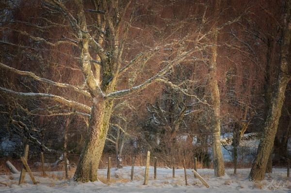 Winter Golden Hour by andylock