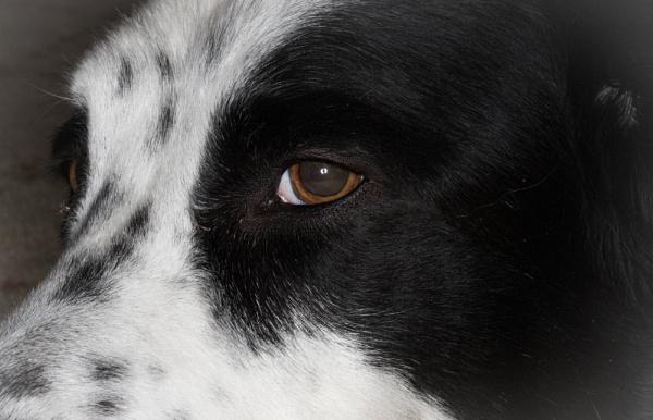 Avoiding Eye Contact by Merlin_k