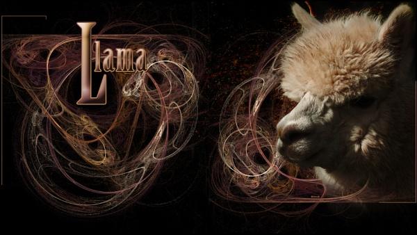 Llama by ctxuk