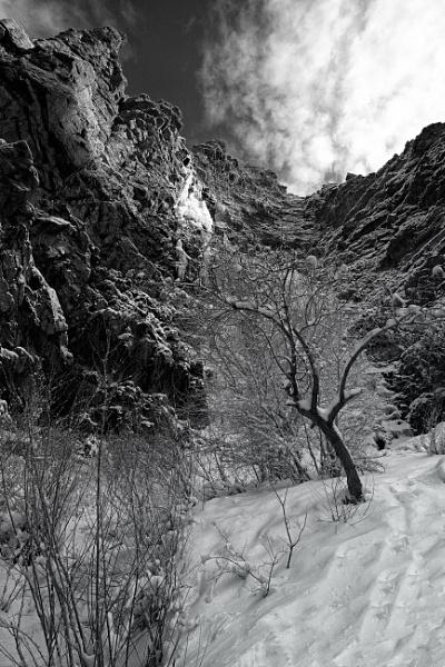 Winter\'s Garden by mlseawell