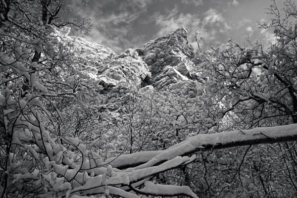 Winter Majestic by mlseawell