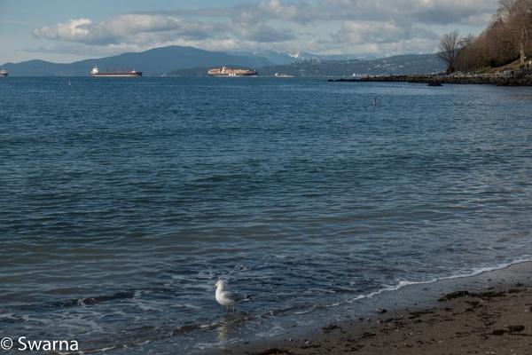 Bird at English Bay, Vancouver BC by Swarnadip