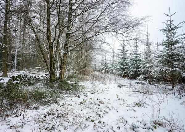 Woodland Snow by DalesLass