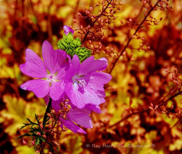Liz\'s garden, Flower Abstract 2 by RayHeath