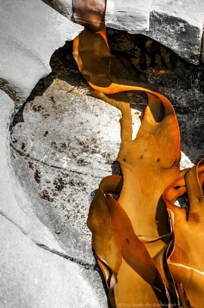 Abstract kelp in rockpool image by RayHeath