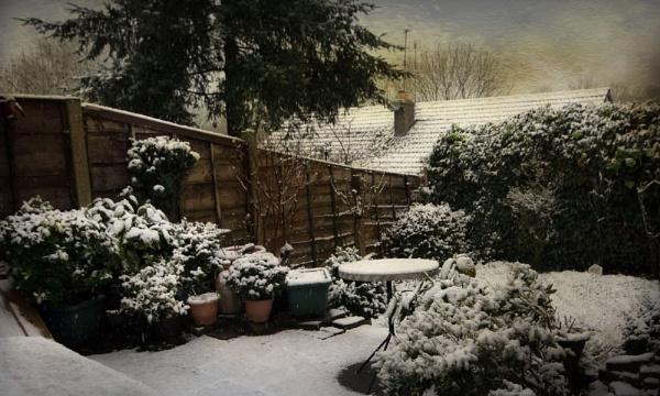 Winter Feb. 2021. by tanglewoodplayer