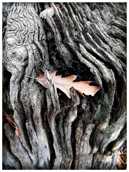 Leaf by luminus