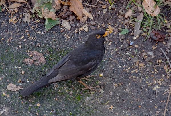 Our regular visitor by af1