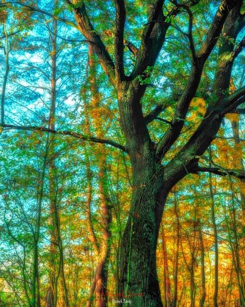 Great Oak by Igmugleza