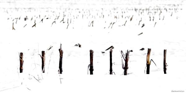 Winter Impression #2 by HarmanNielsen