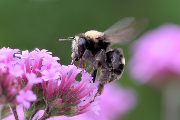 Bee at Work by DPW