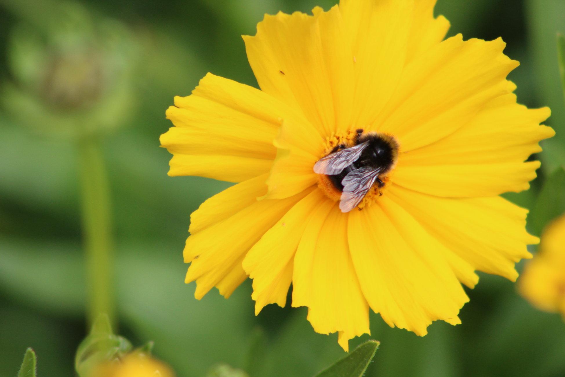 Bee enjoying a snack July 2020