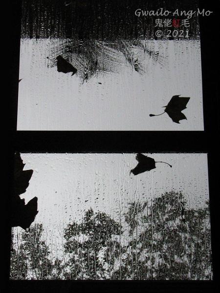 Les feuilles mortes se ramassent by GwailoAngMo