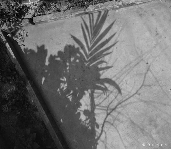 Sunday shadow by Rudranath