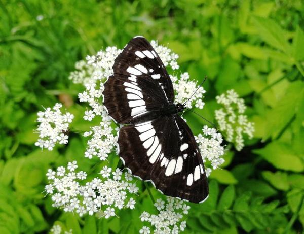 Butterfly by Alex_r