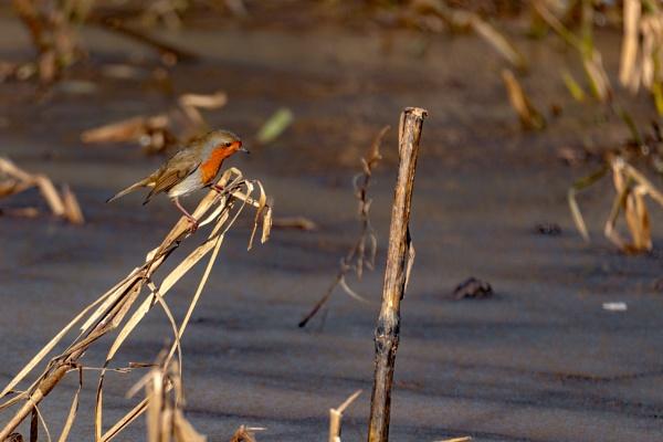 Robin On Ice by terra