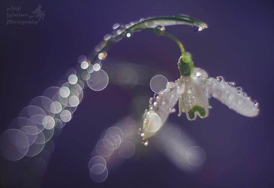 Snowdrop magic
