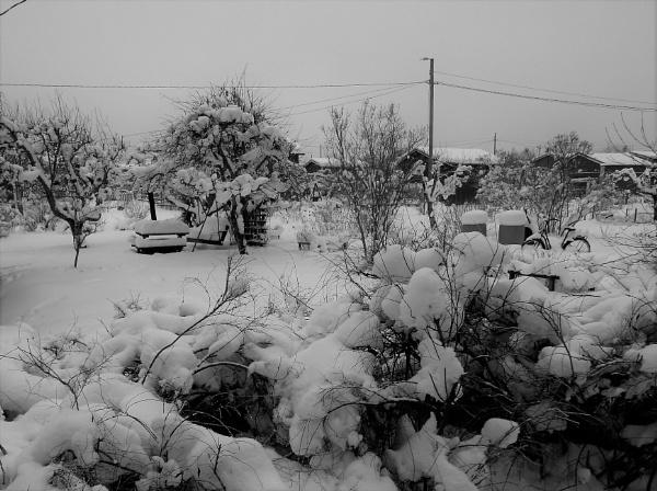 snow by MTT