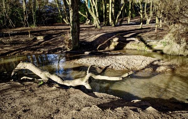 Woodland Shadows by nclark