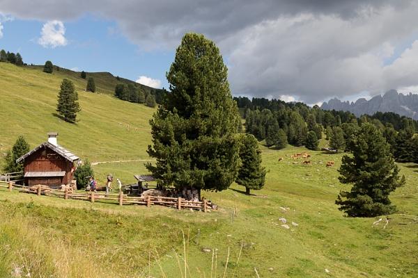 TONADICO TRENTINO/ITALY - AUGUST 11 : Refuge in the Natural Park of Paneveggio Pale di San Martino in Tonadico, Trentino, Italy by Phil_Bird