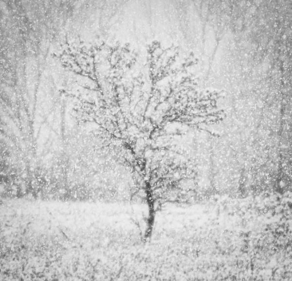 Dream lands of winter by mlseawell