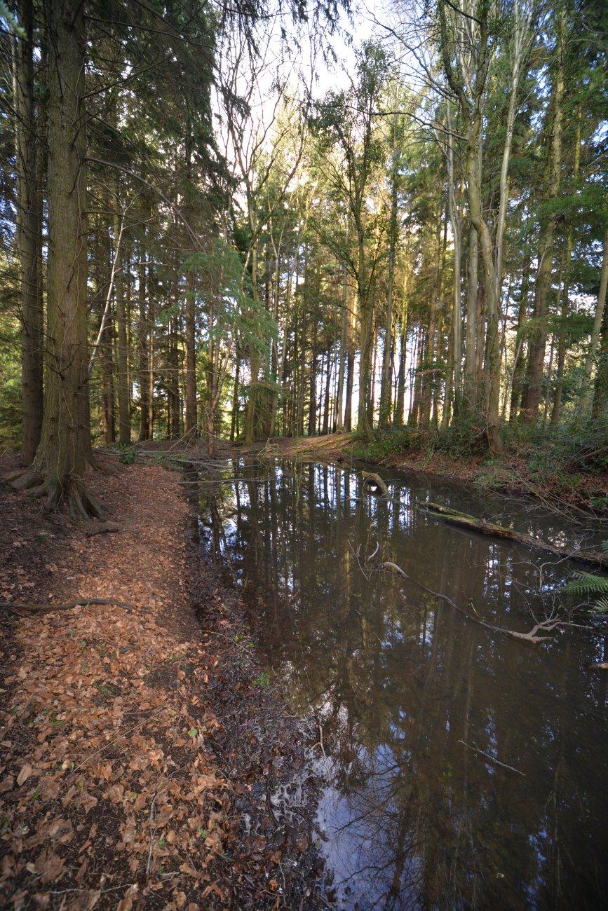 Belvoir forest, Lisburn
