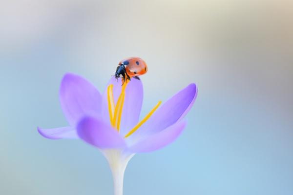 spring2 by ruurd