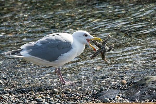 Seagull vs Star Fish by StuartDavie