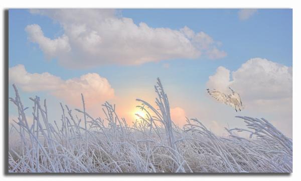 Frosty Sunrise by carper123
