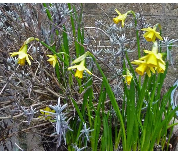Hello Spring. by carol01